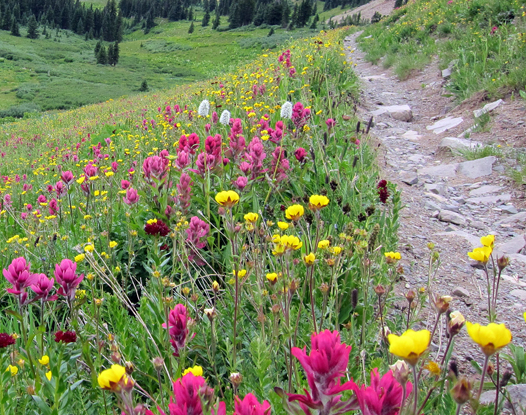 Flowers_and_TrailTread