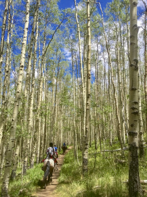 horseback riders in aspen trees