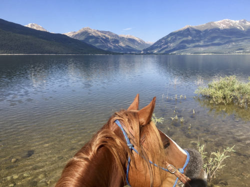 head of horse and alpine lake with mountains