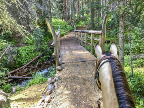 head of horse approaching trail bridge