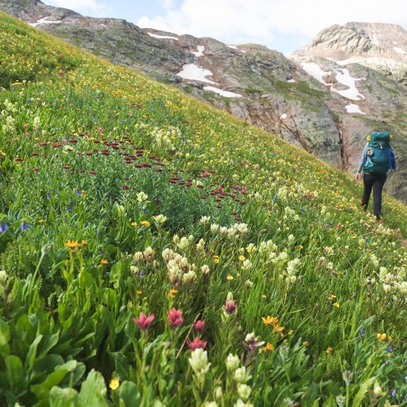 Flowers and hiker and mtn