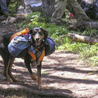 dog with backpacks