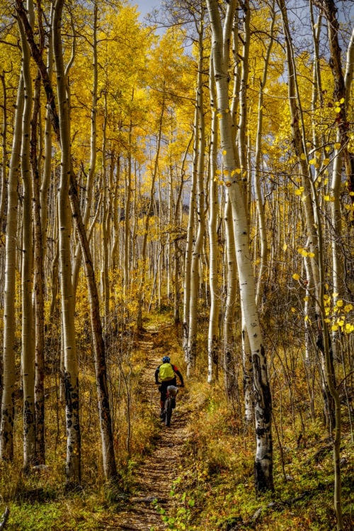 cyclist in orange aspens