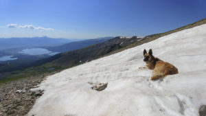 a dog lying in snow on a sunny day high in the mountains
