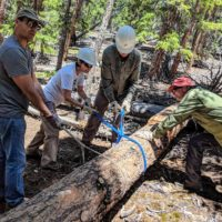 volunteers prepare to move a fallen tree using ropes