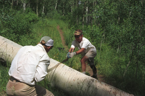two men sawing aspen with crosscut saw