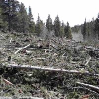 Avalanche debris covering Colorado Trail segment 13 near the Avalanche Gulch Trailhead west of Buena Vista.