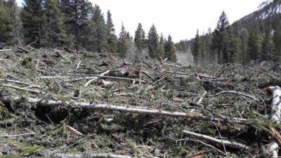 Avalanche debris covering Colorado Trail segment 13 near the Avalanche Gulch Trailhead west of Buena Vista.