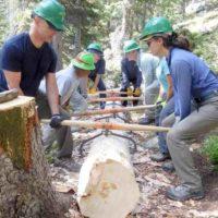 volunteers lifting huge log for trail bridge