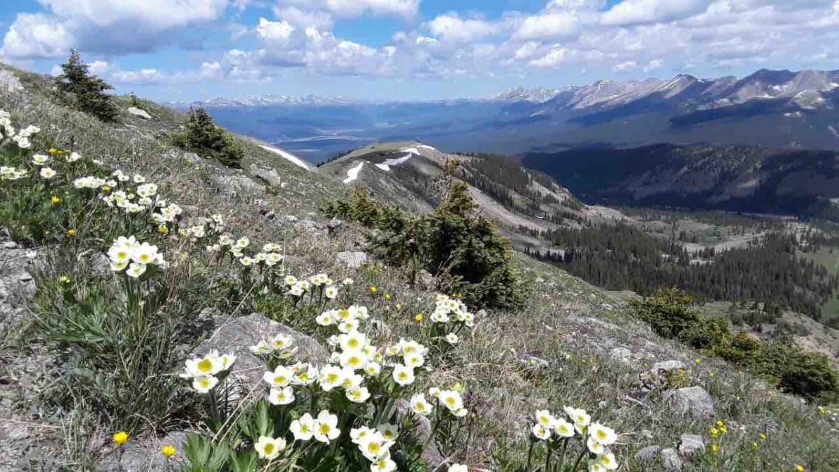 Taken on July 29th above Cottonwood Pass alongside the Trail in CW03. Photo thanks to Mal Sillars.