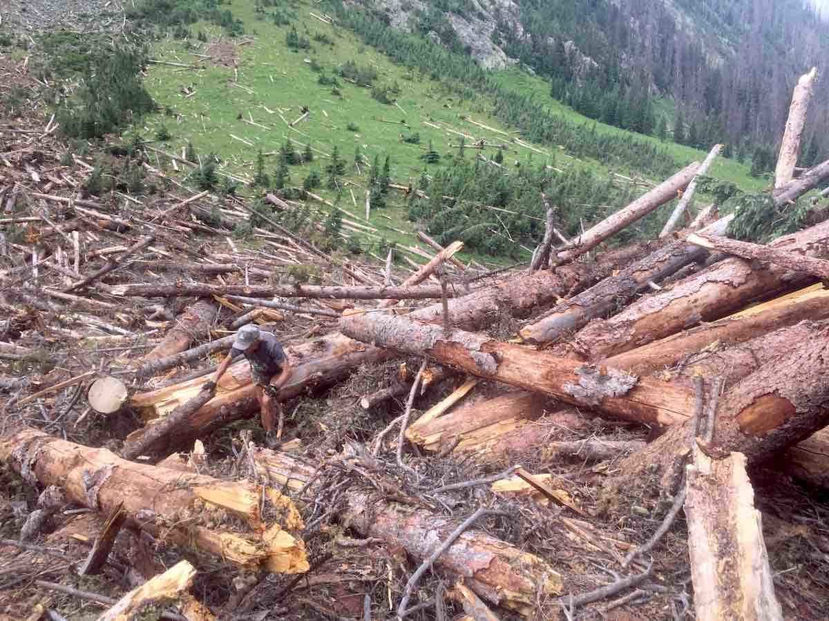 In Segment 24 of The Colorado Trail, CTF Volunteer, Ron Dudek, helps other Adopter volunteers improve the friendliness of one of four avalanche debris crossings.